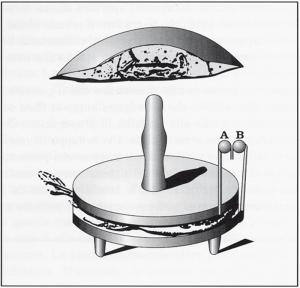 Organo elettrico della torpedine (da una tavola di John Hunter)